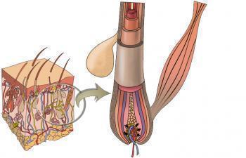 Витамины Пантовигар для роста волос